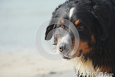 Dog looks near sea