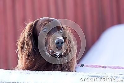 Dog looks at something
