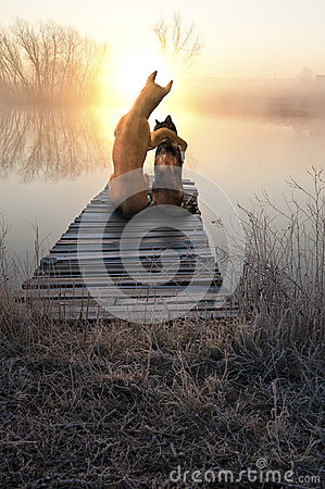 Free Dog Love Cat, Romantic Sunset Stock Photography - 55626492