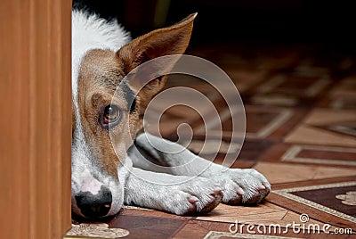 Dog melancholy