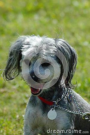 Dog: Mongrel