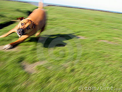 Dog in motion 2