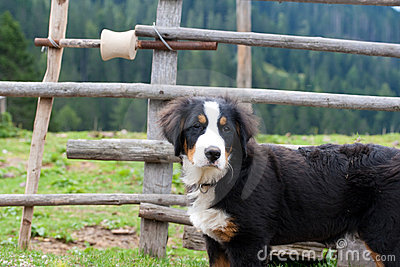 Dog in mountain