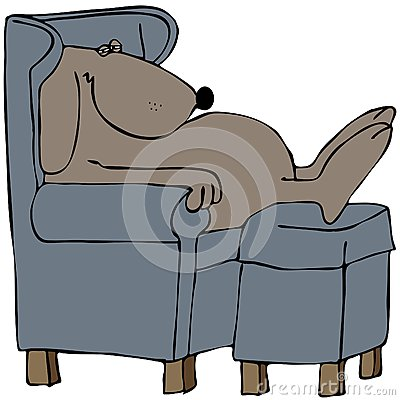 Dog napping in a chair
