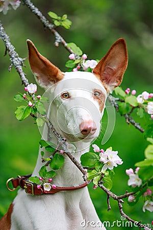 Dog on nature