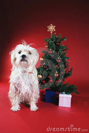 Dog next to Christmas tree
