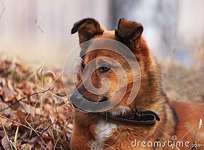 Dog on a nickname Red