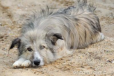 Dog no.1