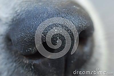 Dog nose macro