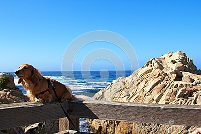 Dog and ocean