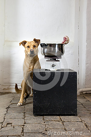 A dog with an old cook stove