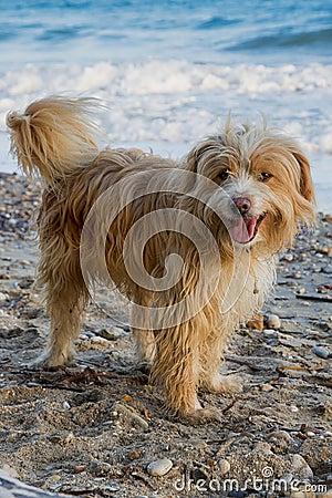 Free Dog On Beach Stock Photos - 124599863