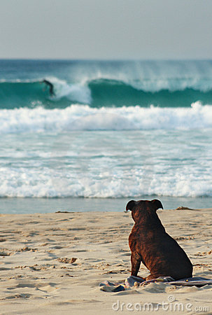Free Dog On Beach Royalty Free Stock Photography - 3329127