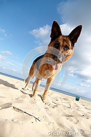 Free Dog On The Beach Stock Image - 11319511