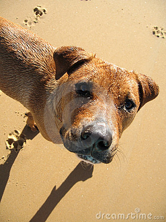 Free Dog On The Beach Royalty Free Stock Photo - 5037685