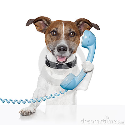 Free Dog On The Phone Talking Royalty Free Stock Image - 27463356