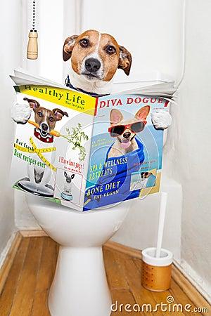 Free Dog On Toilet Seat Stock Image - 57612631