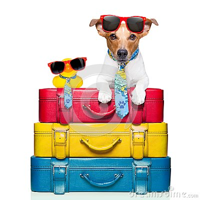 Free Dog On Vacation Royalty Free Stock Image - 119239106