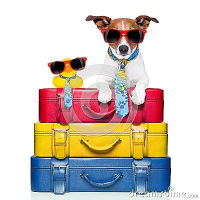 Free Dog On Vacation Stock Image - 41755041