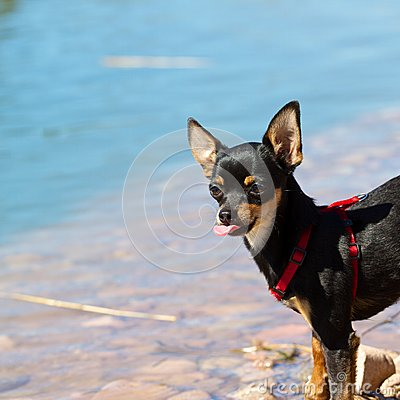 Free Dog On Water Stock Photography - 30802752