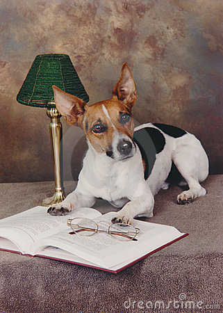 Dog and An Open Book