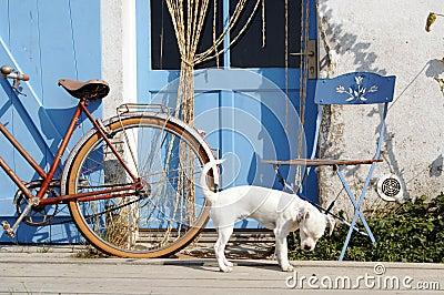 Dog outside blue door.