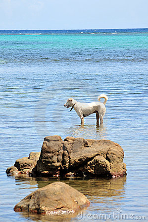 Free Dog Paddling In Sea Royalty Free Stock Images - 14430179