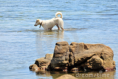 Dog paddling in sea