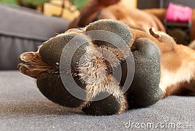 Dog pat
