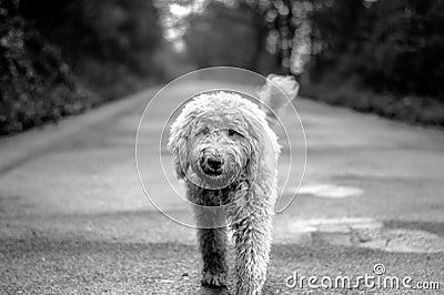 Dog On Path Free Public Domain Cc0 Image