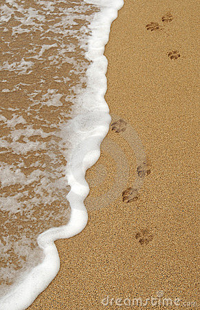 Free Dog Paw Footprints In The Sand Stock Image - 18598261