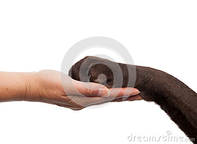 Dog paw and human hand doing a handshake