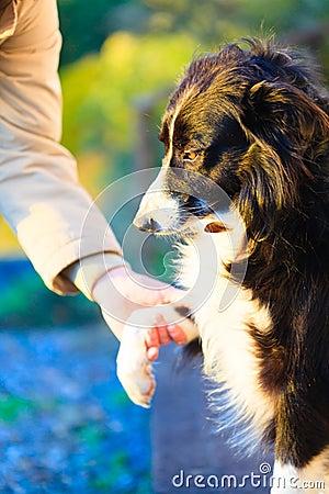Dog paw and human hand doing a handshake outdoor