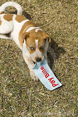 Dog with Pay Bills Sign