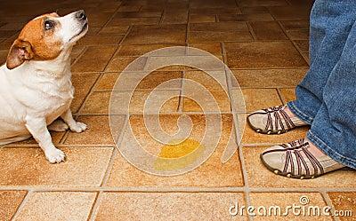 Dog pee discover