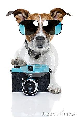 Free Dog Photographer Royalty Free Stock Photo - 23515755