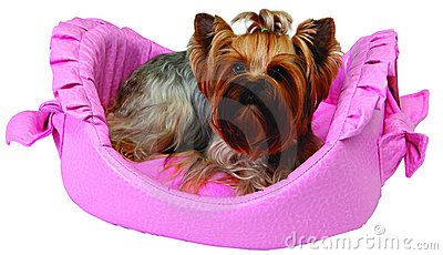 Dog on pink bed