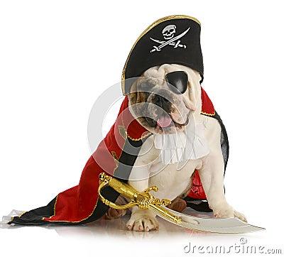 Dog pirate