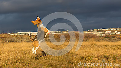 A dog playing in the autumn sun.