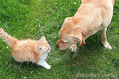 Dog playing with kitten