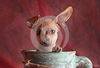 Dog in a pot