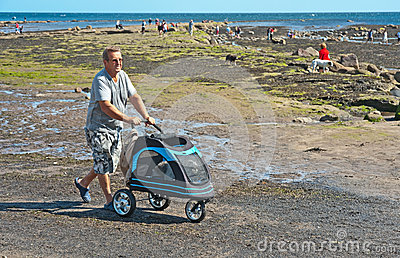 Dog in a pram at Robin Hood s Bay Editorial Photography