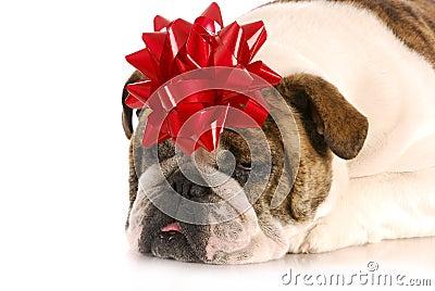 Dog present