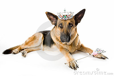 Dog Princess Fairy Stock Photography - Image: 6883432