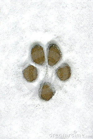 Dog Print In The Snow Stock Photos - Image: 1875063