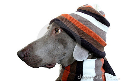 A dog profile with hat and scarf
