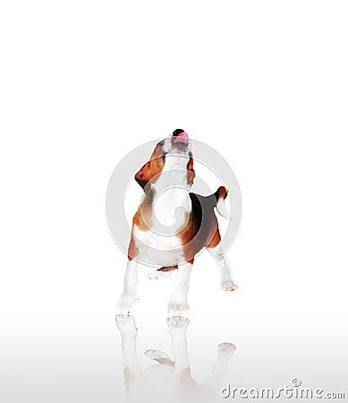 Free Dog - Puppy Stock Photos - 1458073