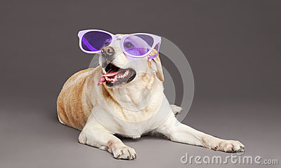 Dog with Purple Glasses at Studio