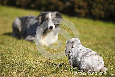 Dog and rabbit, head to head