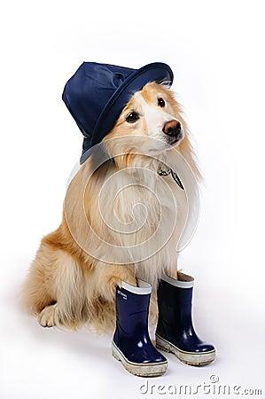 Dog With Rain Boots An...